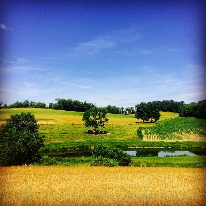 Berks County Pasture
