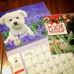 Yuki Toyota Calendar 2015
