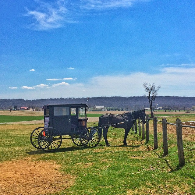 Amish Horse-and-buggy hitched up near Fleetwood/Kutztown.