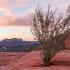 desert, red rock, sedona, vortex